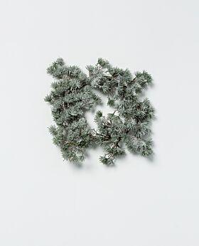 Akita needle wreath