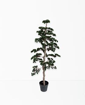 Bonsai tree - green