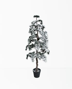 Bonsai tree - snow