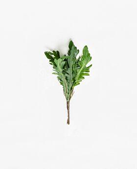 Rucola leaf
